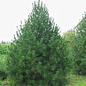 苗圃的冬季苗木管理