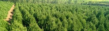 做好园林苗木秋季病虫防治很重要