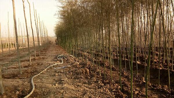五路两侧增绿绿化工程