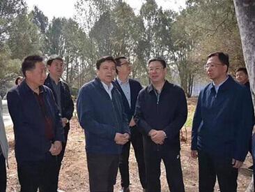 北京植物园白皮松林