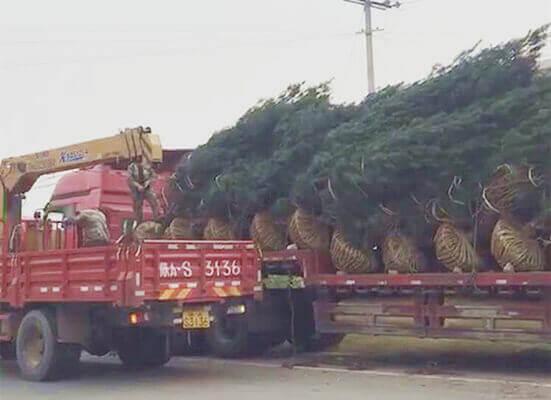 西安高质量苗木价格稳定