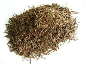 白皮松松针叶的作用