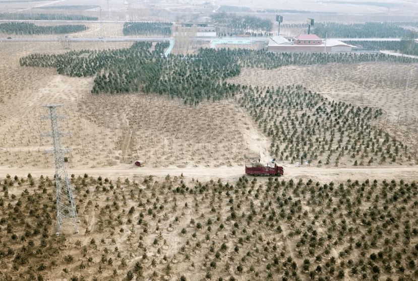 雄安即将开建3.9万亩生态游憩林