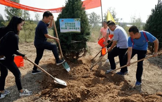 同心共植70棵白皮松树 喜庆祖国70年华诞