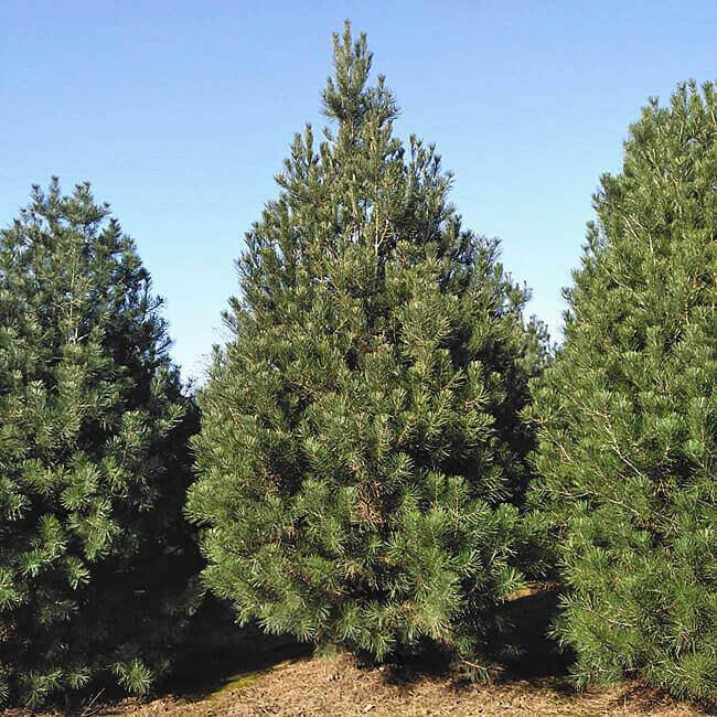 2020年究竟哪些苗木更受青睐?