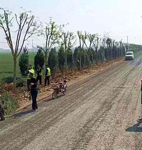 2020年白皮松苗木在华北五省供应严重过剩